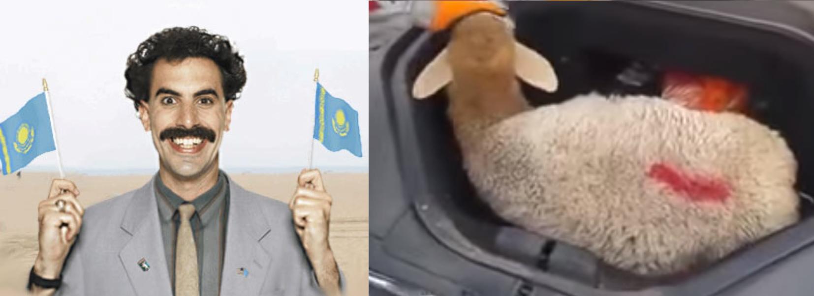 Borat sheep model S