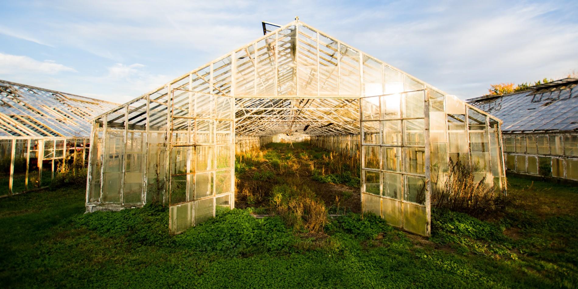 EGEB: How transparent solar could make greenhouses net zero - Electrek