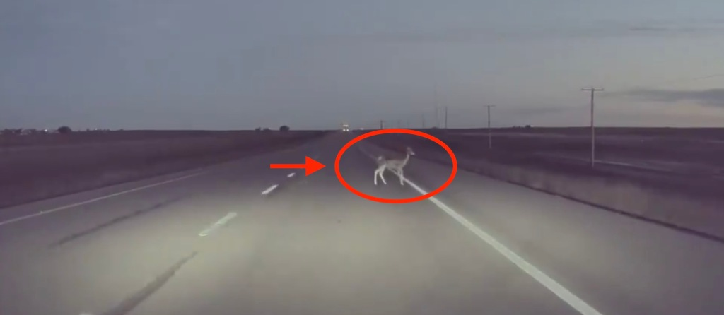 photo of Watch Tesla Autopilot swerve at last second to avoid a deer image